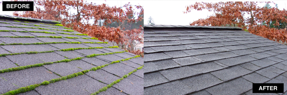 Bellevue Roof Moss Removal